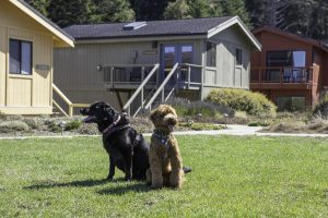 dogs in front of mendocino cottages